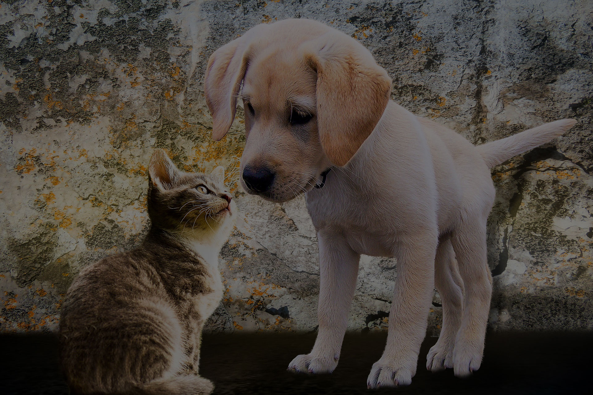 animals-cat-curiosity-dog