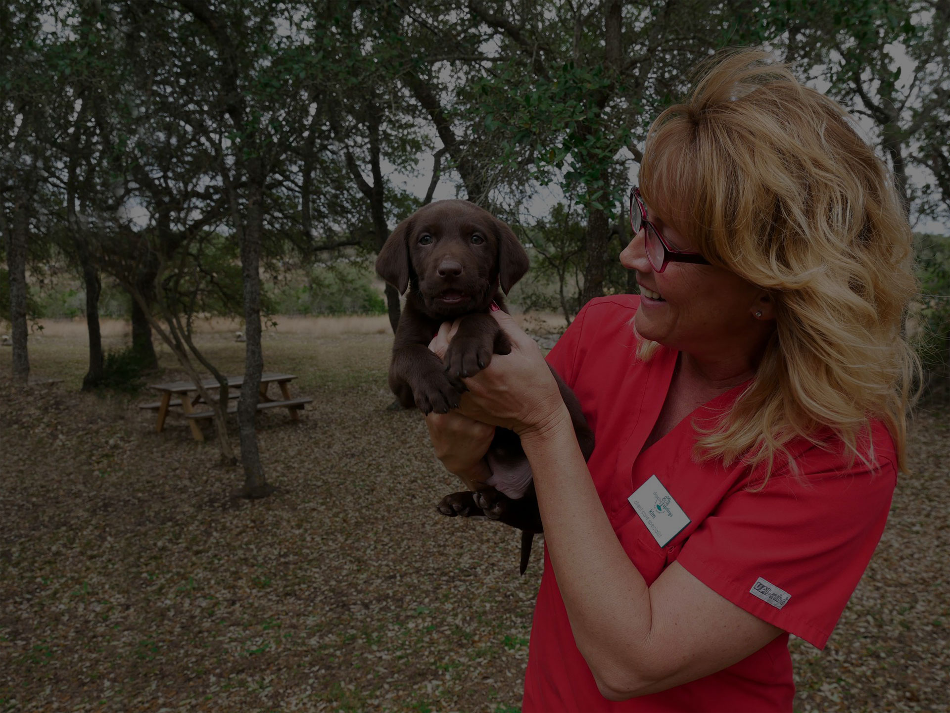 doctor holding a chocolate color cute labrador puppy